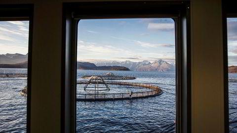 DN ser ut til å ha mistet forståelsen for at vi trenger skatteregimer som ikke svekker de næringer som kan skape arbeidsplasser og eksportinntekter, skriver Kristin Langeland i Sjømat Norge.