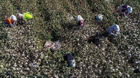 En femtedel av verdens bomullsproduksjon kommer fra XinjiangKina. Provinsens mest innflytelsesrike selskap underlegges nye amerikanske sanksjoner i september. Det rammer internasjonale tekstilselskaper.