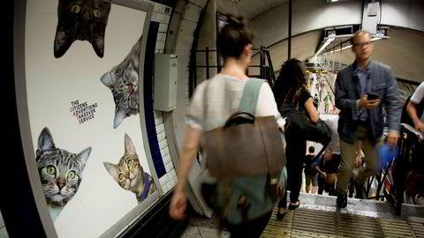 Lånebasert folkefinansiering er i land som England blitt så stort at de som søker finansiering nå, er vanlige bedrifter som velger løsningen fremfor tradisjonelle alternativer som banker, skriver artikkelforfatteren. Her fra en t-banestasjon i London hvor det folkefinansierte prosjektet Cats erstattet tradisjonelle reklameplakater. Kampanjen var organisert av Glimpse, som definerer seg som et åpent og frivillig kollektiv for kreative mennesker.