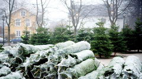 Økt etterspørsel etter juletrær av edelgran øker juletredyrkernes behov for frø av høy kvalitet og planter som er tilpasset norske vokseforhold, sier forfatteren.