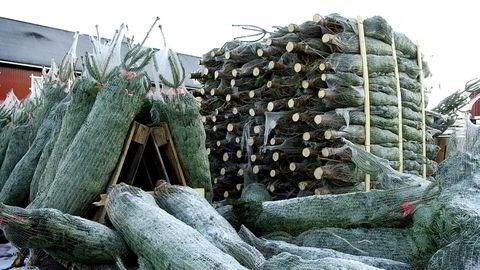 Mellom 30.000 og 50.000 juletrær importeres fra Danmark i år.