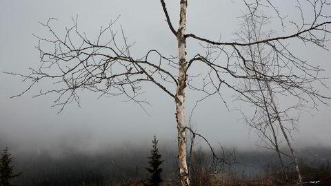 I dagens «hugg og plant»-skogbruk, som omfatter mer enn 95 prosent av vårt produktive skogareal, neglisjeres langt på vei faget skogskjøtsel, sier forfatteren.