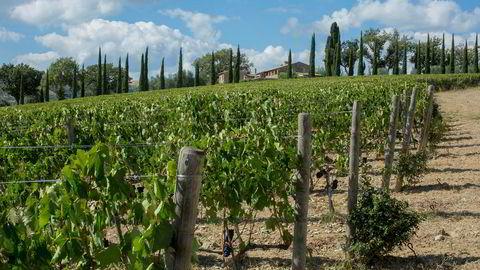 Vingården til Laura Brunelli leverer strålende viner, som passer perfekt til påskelammet.