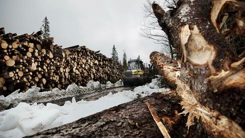 Når det gjelder produksjon av biodrivstoff fra norsk skog, fokuserer alle seriøse aktører – både innen forskning og industri – på bruken av restmaterialene, og ikke på hogst av skog til energiproduksjon. Her fra skogshogst i Mo i Rana.