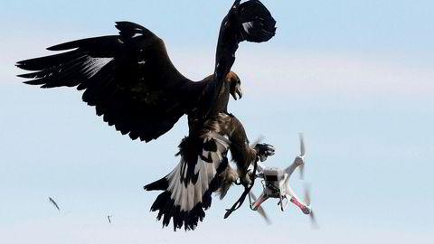 En ørn møter en drone ved en flybase sør i Frankrike.
