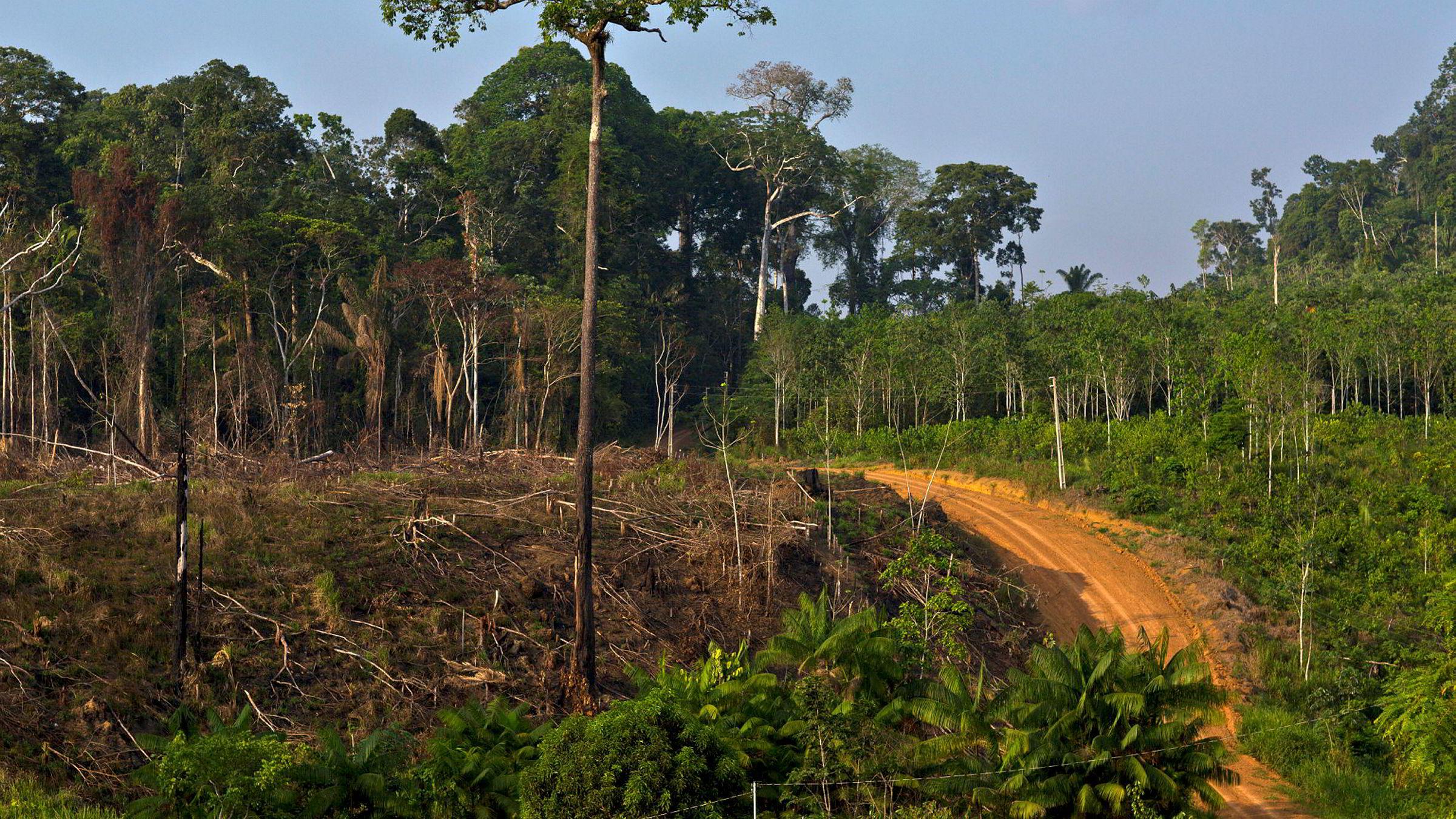 Avskogingen øker i Amazonas, og klima- og miljøminister Vidar Helgesen advarer Brasil om at det kan bli stans flommen av norske regnskogmilliarder hvis ikke trenden snur.