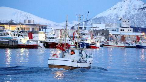 Havforskningsinstituttets utvetydige råd er å ikke åpne «LoVeSe». Området er det viktigste for de norske fiskeriene – og det mest sårbare for oljeutslipp. Her fra Myre i Vesterålen.