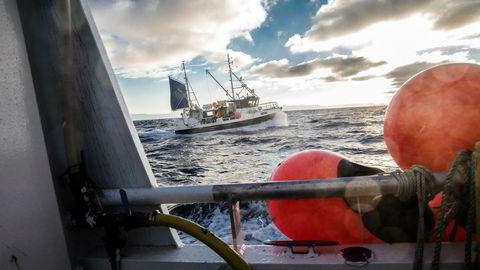 Fiskebåten «Kaja Marie», med fiskerbrødrene Bjørn Tore Rosvoll og Raymond Rosvoll ombord, er på vei for å levere fangsten til Nordvågen.