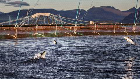 Veksten i norsk havbruk har stoppet opp. Med verdens strengeste lusekrav, i praksis maks én kjønnsmoden hunnlus per ti kilo slaktefisk, har ikke næringen lenger verktøy eller teknologi som muliggjør vekst.