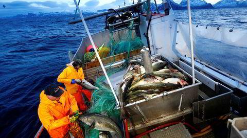 Skreifisket står for døren. Verdien av torskefisket har aldri vært større enn i 2016, og neste år kan bli et nytt rekordår.