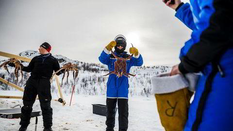 Guide Geir Hansen (til venstre) står klar til å «dele ut» kongekrabber for fotografering. Konferansedeltager Vegard Gamnes (i midten) poserer allerede på isen like ved Snøhotellet i Kirkenes.