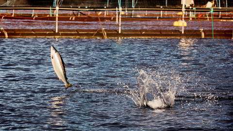 De ansatte i oppdrettsselskapet Nova Sea fikk 202 000 kroner hver i bonus. Foto: Per Thrana