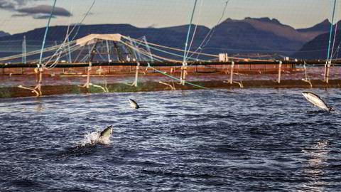 «Beveger vi oss mot en økologisk katastrofe, eller er lusemiddelbruken problemfri for rekene? Vi vet ikke om sannheten er én av disse, eller et sted midt i mellom», skriver innleggsforfatteren.Bildet viser Lerøy Aurora, et prosessanlegg for laks på Skjervøy.