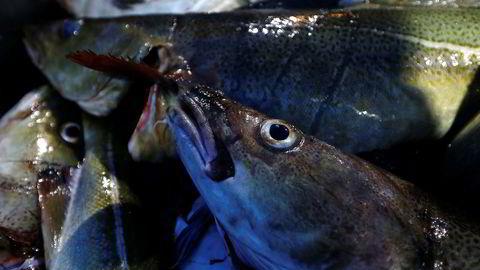 Norsk fiskerinæring opplever rekordvekst.