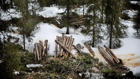 Realiteten er at vi er i gang med en enorm omforming av skogene våre, sier forfatteren.