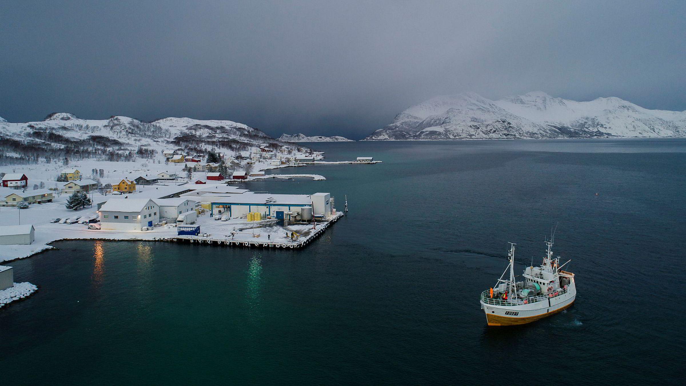 Norsk fiskehverdag kommer til å forandre seg etter brexit. Her er fiskebåten «Mjosund» inne hos Lerøy Norway Seafood i Tromvik for å levere skrei.