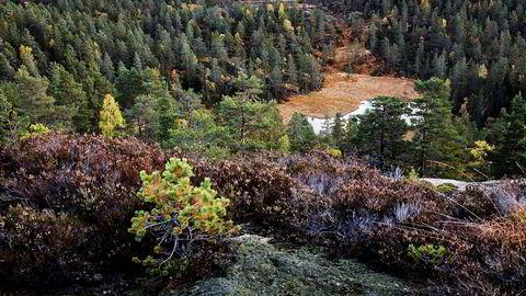 Biomangfold og økosystemer som sliter, har ikke fått samme oppmerksomhet som klimaet, men det er også en risiko som har betydelige samfunnsmessige og økonomiske konsekvenser, skriver Idar Kreutzer og Line Asker.