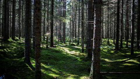 Et ekspertpanel oppnevnt av de europeiske vitenskapsakademiene oppfordrer til stans i hugging av skog til bioenergi. Brenning av skog er ikke et karbonnøytralt klimatiltak, konkluderer de.