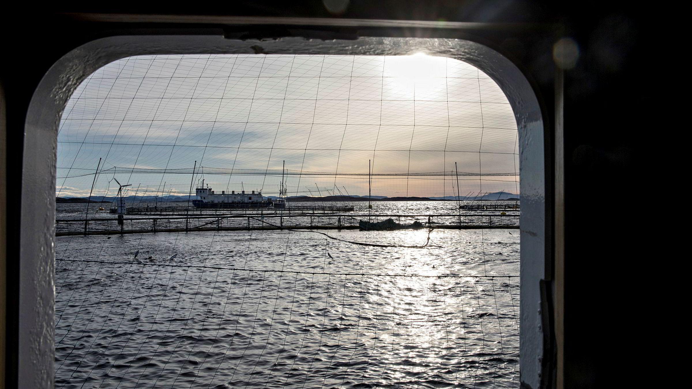 En liste med «gryteklare» prosjekter innen havbruksteknologi på minst ti milliarder kroner kan stoppes eller forsinkes kraftig av offentlige reguleringer eller saksbehandling, skriver artikkelforfatterne