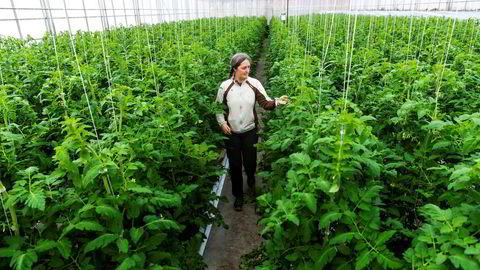 Kristin Bue Jahn (52) dyrker grønnsaker, blant annet tomater, på Hofstad Gård i Asker. For å få driften til å gå rundt er hun avhengig av sesongarbeidere, normalt utenlandsk arbeidskraft. Med stengte grenser må hun tenke annerledes, og forrige uke søkte hun etter hjelp Facebook.