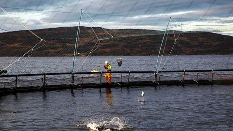Utbrudd av fiskesykdommen PD i Nord-Trøndelag og krav om at all syk laks må slakes ut skaper strid mellom oppdrettsaktørene.