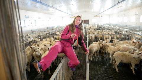 Daglig leder Marit Mjøen Solem i Findmysheep har 25.000 beitedyr som er utstyrt med elektronisk bjelle. – En beitesesong koster 175 kroner per dyr. Noen sier en sau ikke er så mye verd, men det handler om hvor mye man verdsetter å bruke tid på å lete etter dem, sier Solem.