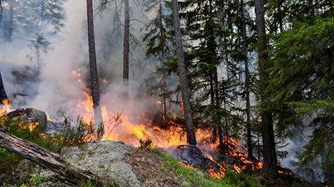 Ukontrollerte branner utgjør en stor samfunnsrisiko, og skogbranner frigjør store mengder CO2. Er det mulig å redusere brannrisikoen i produksjonsskogen dersom klimaet blir varmere?
