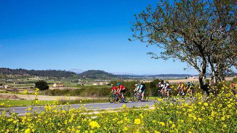 Lunsjpausen er unnagjort i landsbyen Petra. På vei tilbake til kysten beveger syklistene seg gjennom et fruktbart kulturlandskap midt inne på Mallorca. Landskapet er farget av mye regn tidlig på vinteren.