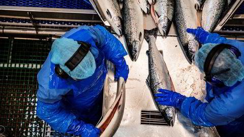 Eksportverdien av særlig oppdrettslaks og torsk falt kraftig i august.