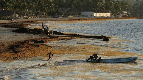 Illustrasjonsbildet viser sjøgress på Playa Del Carmen i Mexico, et fenomen som regelmessig oppstår i området.