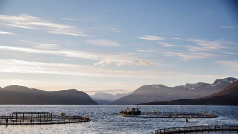 Vind og strøm kan påvirke hvor stor risiko det blir for høy dødelighet fra lakselus på villaks og ørret, skriver Mari S. Myksvold i innlegget. Her, Lerøys anlegg på Kågen ved Skjervøy i Nord-Troms.