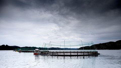 Det skjer mye i norsk havbruk som på kort tid kan endre den fastlåste debatten om lakseoppdrett, skriver artikkelforfatteren.