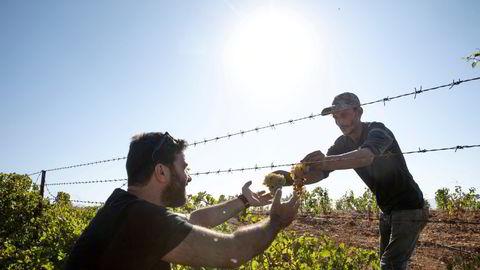 Faouzi Issa inspiserer nye de vinmarkene til Domaines Des Tourelles i Bekaadalen. Det har vært laget vin i Libanon siden Romerriket strakk seg dit, men den libanesiske vinindustrien har aldri hatt det vanskeligere.