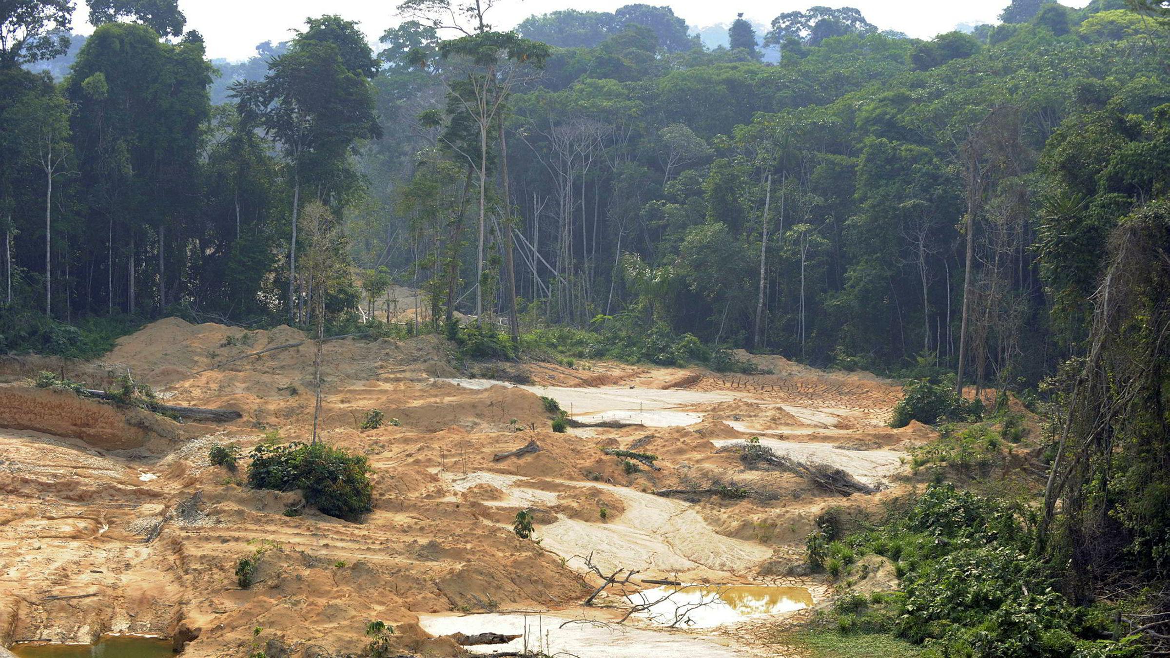Økt bruk av biodrivstoff kan bli katastrofalt for regnskogen hvis man ikke unngår bruk av palmeolje, viser ny rapport.