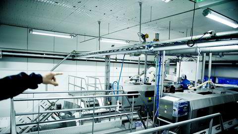 At tørket fiskeslam kan resirkuleres og benyttes som gjødsel i landbruket er et svært viktig funn som kan bidra til å gjøre oppdrettsnæringen mer bærekraftig, skriver artikkelforfatterne. Her fra lakseslakteriet Nova Sea på Lovund.