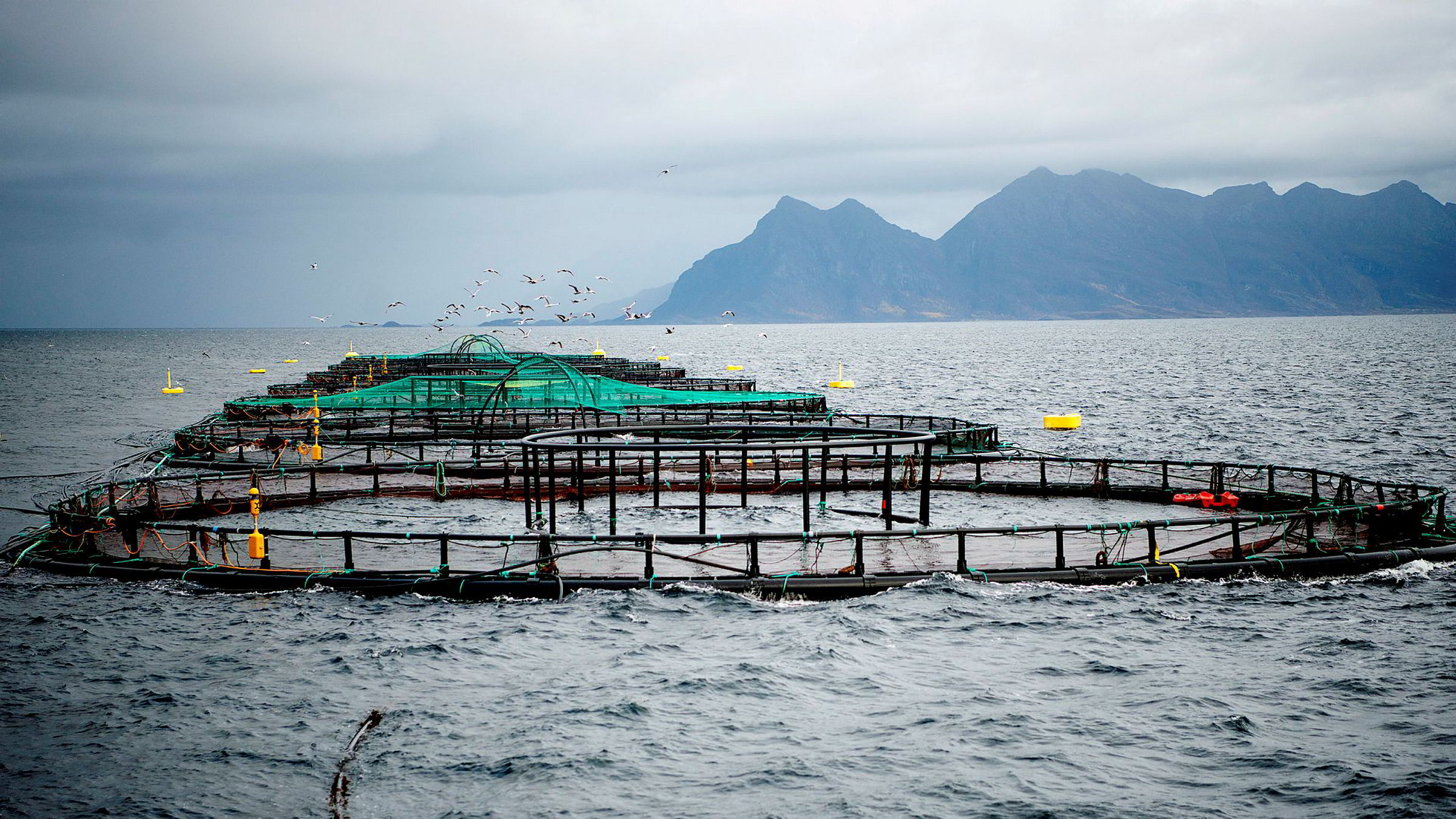 Debatten om grunnrentebeskatning av oppdrettsnæringen fortsetter. Bildet viser oppdrettsmerder ved Landegode utenfor Bodø.