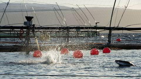 Ordningen med utviklingstillatelser ble møtt med stor interesse – større enn hva Fiskeridirektoratet var forberedt på, men spørsmålet er hva næringen som helhet – og samfunnet for øvrig – egentlig får igjen for ordningen, skriver artikkelforfatterne.