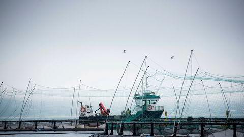 Wilsgård Fiskeoppdrettsanlegg på Senja har fått halvert salget av laks til USA etter at koronaviruset førte til færre flyavganger til USA.