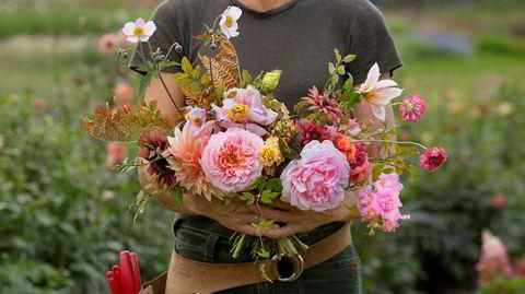 Kutt ute. Å plukke blomster, rive dem av med fingrene, kan gjøre at de raskt henger med hodet. Snitt av blomstene i stedet.