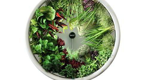Rotasjon. Rotofarm gjør det mulig å dyrke ferske grønnsaker på skrivepulten.