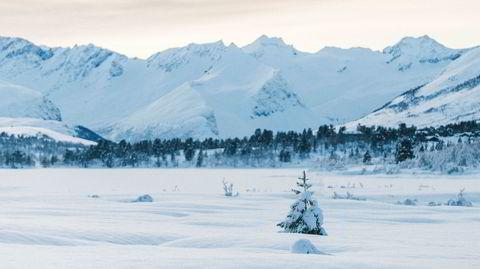 Fjellet gror igjen, og det er dårlig nytt for miljøet. Her ser vi Strandafjellet i Møre og Romsdal.