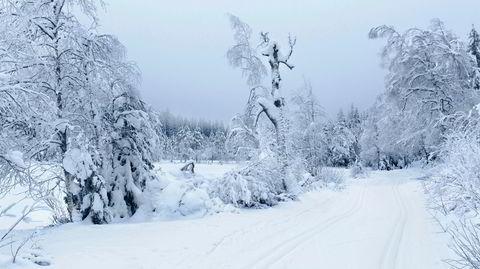 Østlandsidyll. Oslo har et av verdens beste langrennstilbud når minusgradene spiller på lag. For Marit Bjørgen er vinteren hovedstadens flotteste årstid.